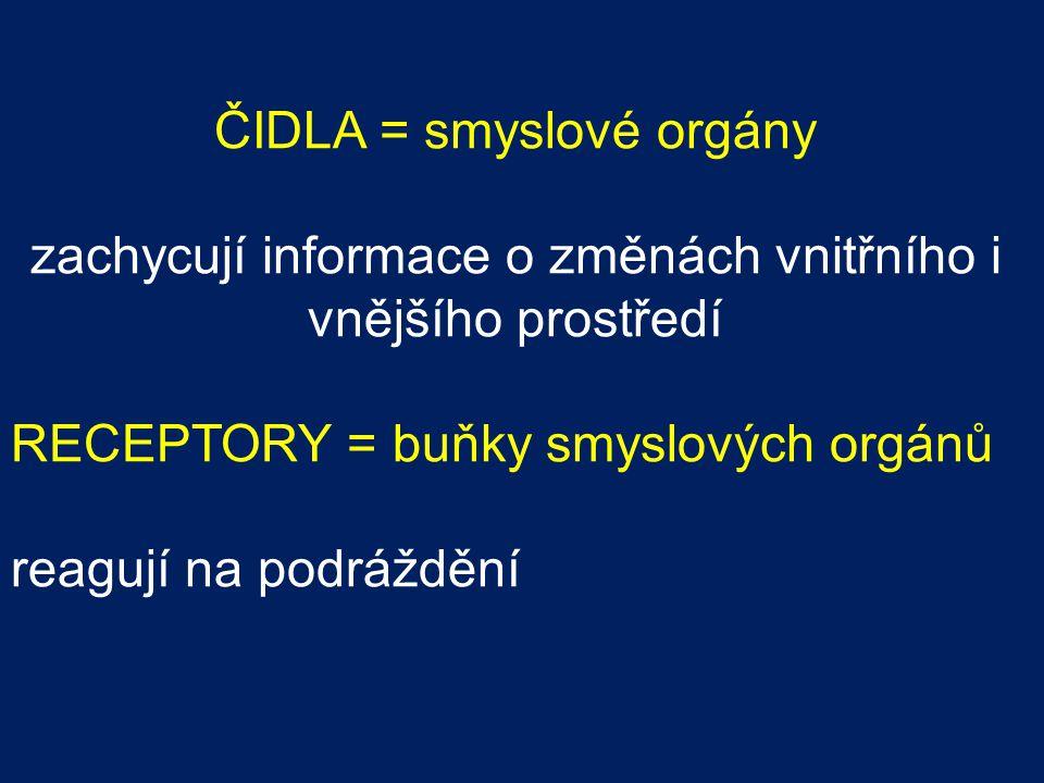 ČIDLA = smyslové orgány