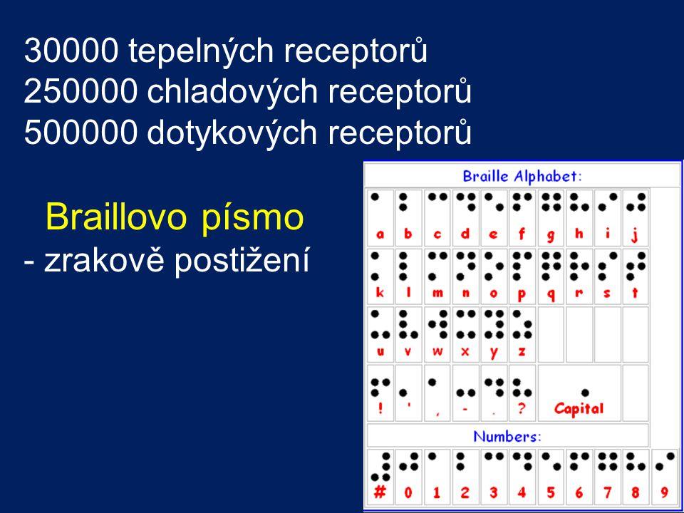 Braillovo písmo 30000 tepelných receptorů 250000 chladových receptorů