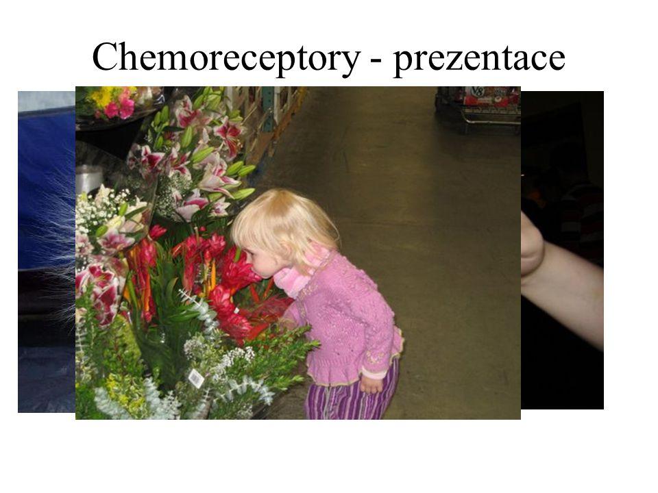 Chemoreceptory - prezentace