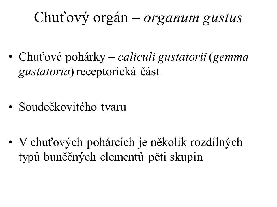 Chuťový orgán – organum gustus