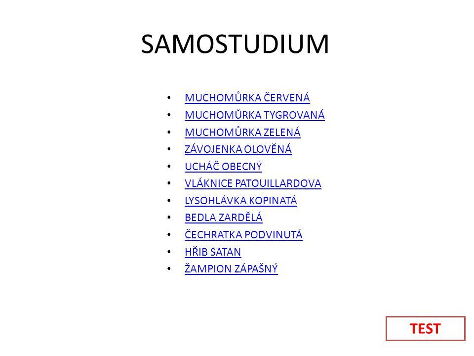 SAMOSTUDIUM TEST MUCHOMŮRKA ČERVENÁ MUCHOMŮRKA TYGROVANÁ