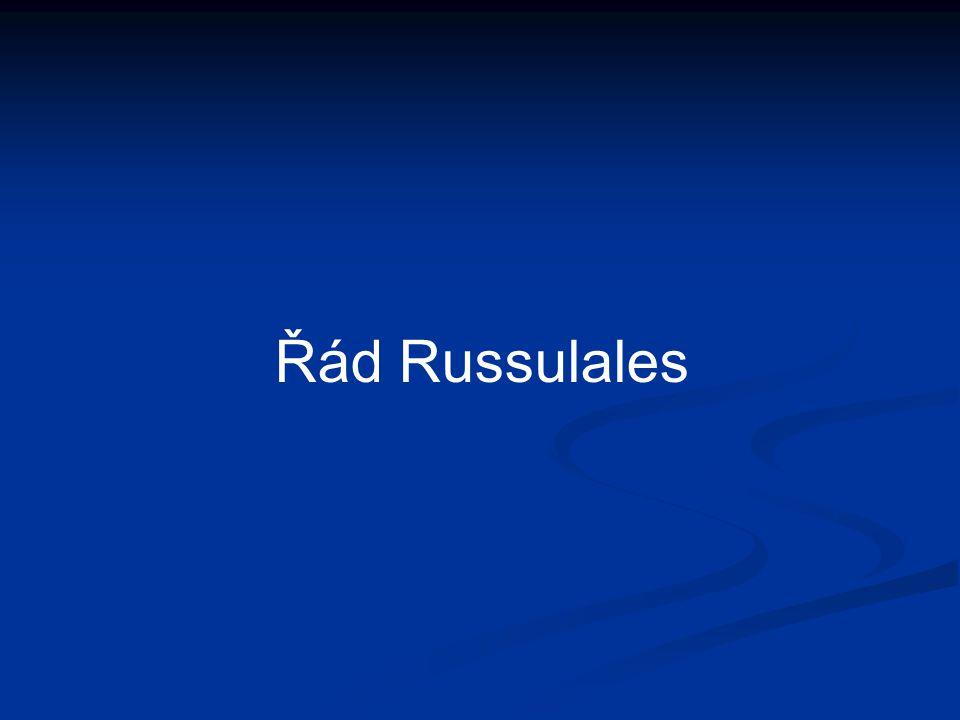 Řád Russulales