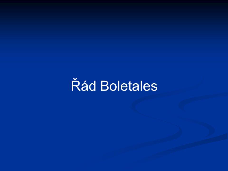 Řád Boletales