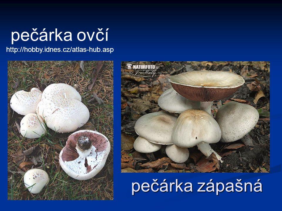 pečárka ovčí http://hobby.idnes.cz/atlas-hub.asp pečárka zápašná