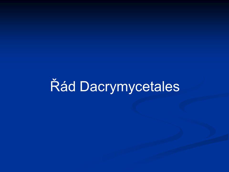 Řád Dacrymycetales