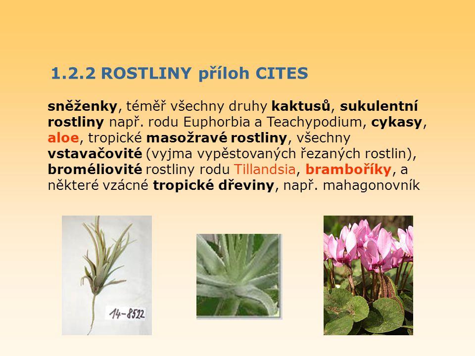 1.2.2 ROSTLINY příloh CITES