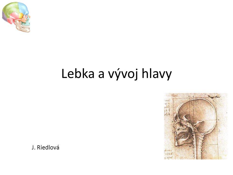 Lebka a vývoj hlavy J. Riedlová