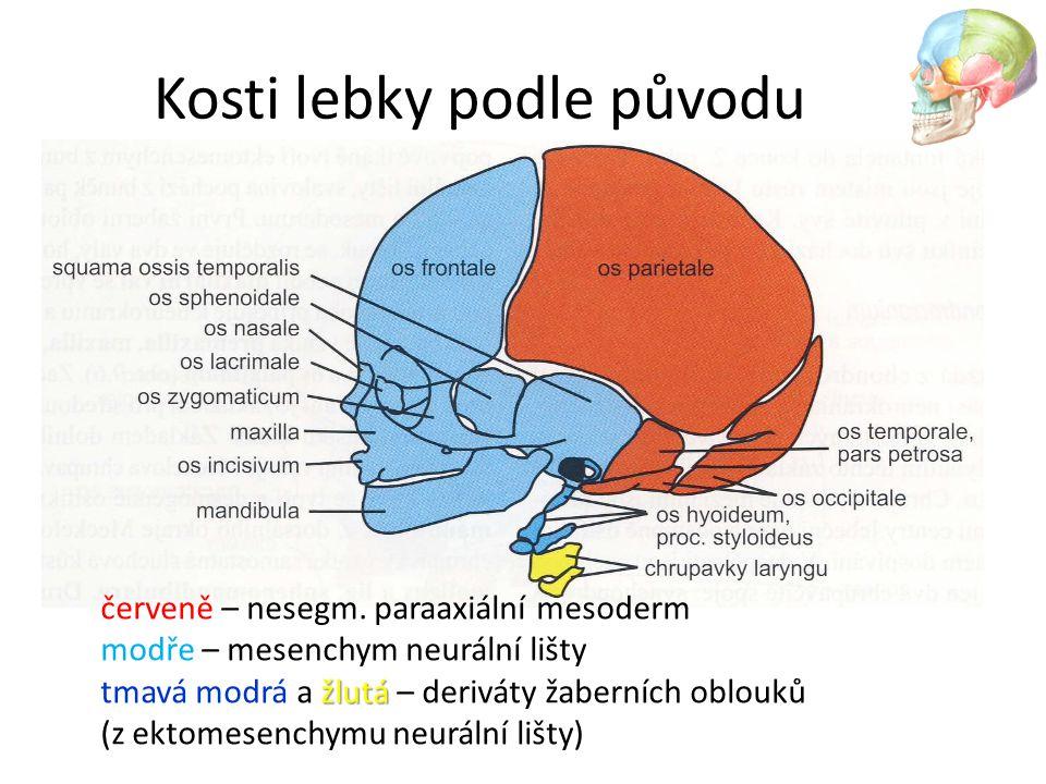 Kosti lebky podle původu