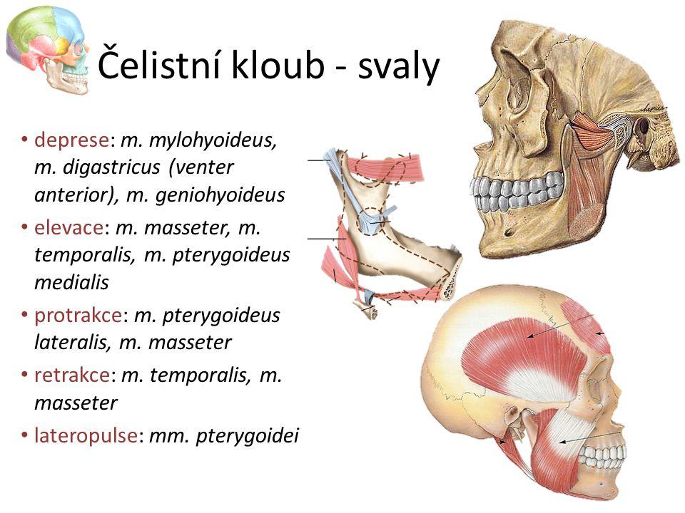 Čelistní kloub - svaly deprese: m. mylohyoideus, m. digastricus (venter anterior), m. geniohyoideus.