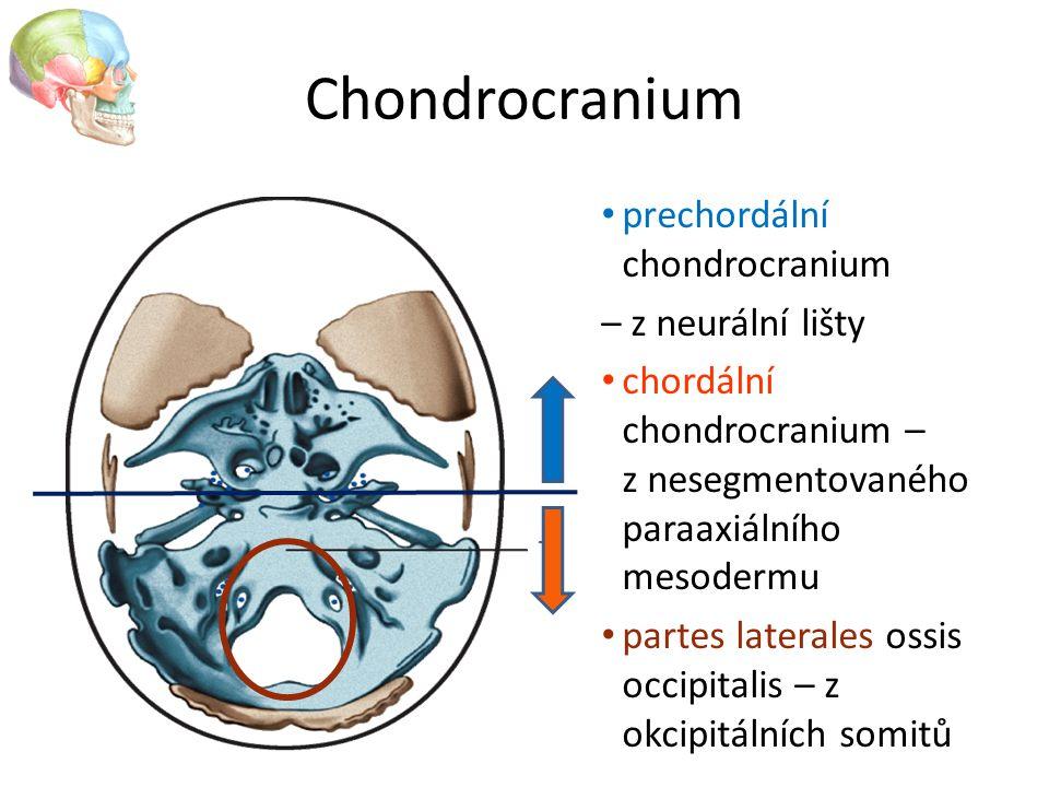 Chondrocranium prechordální chondrocranium – z neurální lišty