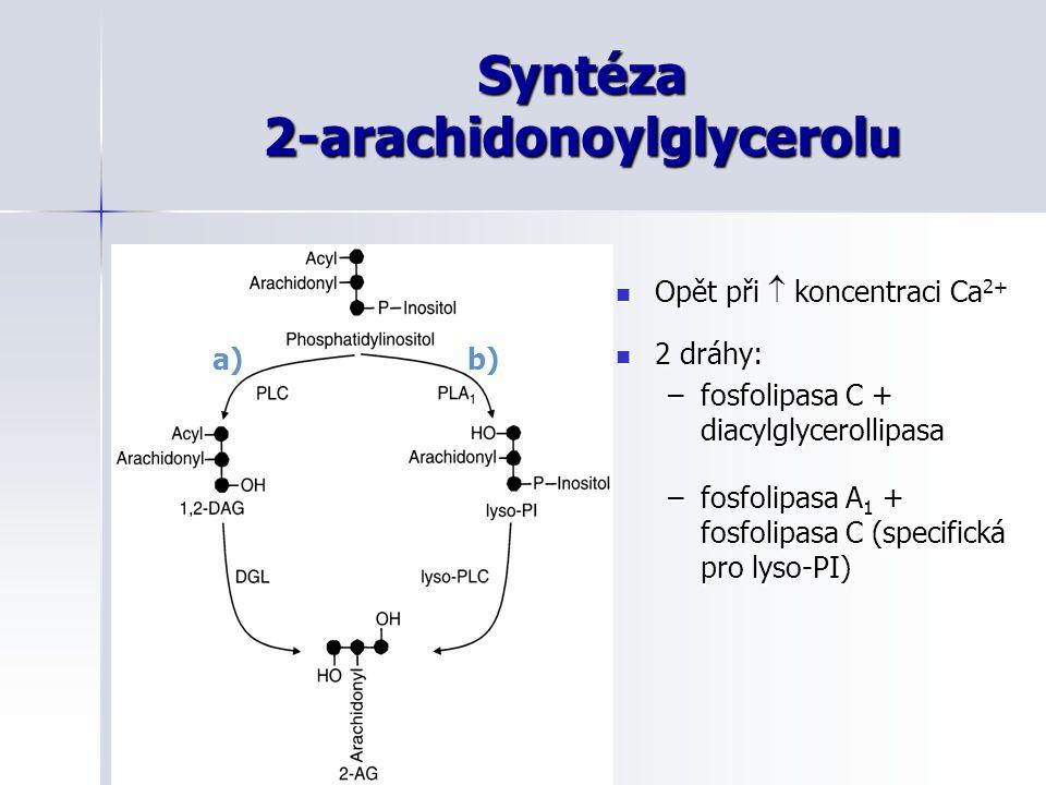 Syntéza 2-arachidonoylglycerolu