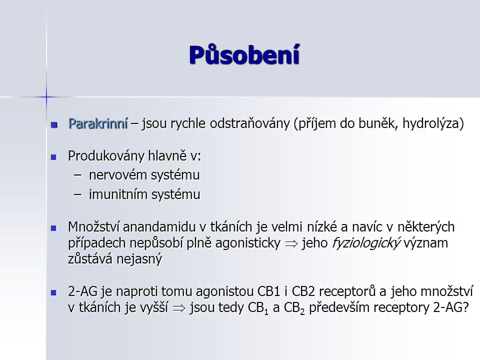 Působení Parakrinní – jsou rychle odstraňovány (příjem do buněk, hydrolýza) Produkovány hlavně v: nervovém systému.