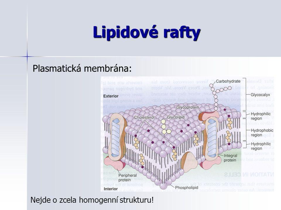 Lipidové rafty Plasmatická membrána: