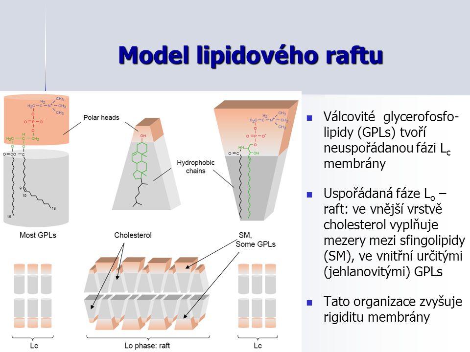 Model lipidového raftu