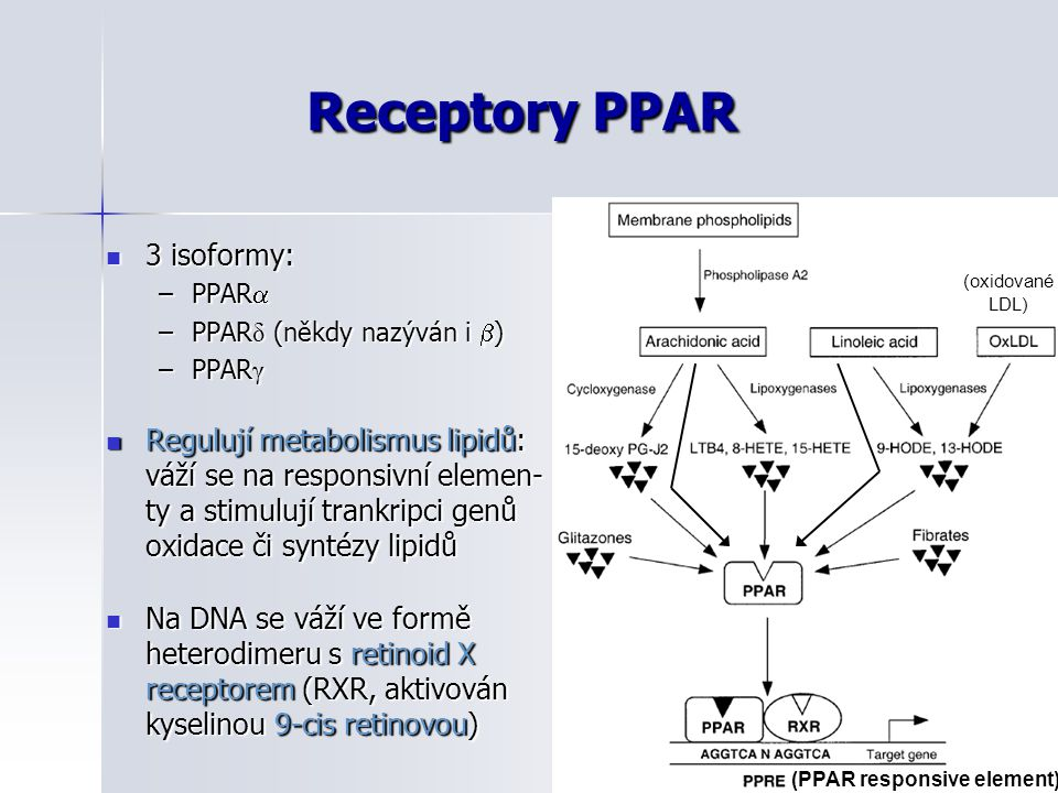 Receptory PPAR 3 isoformy: