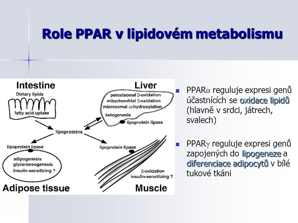 Role PPAR v lipidovém metabolismu
