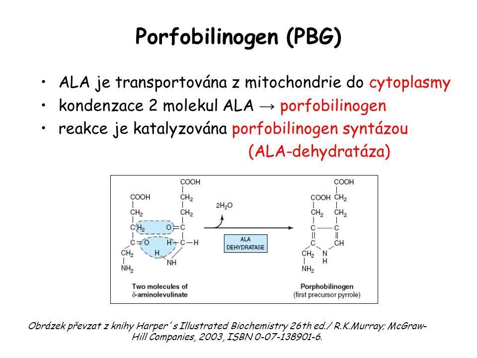 Porfobilinogen (PBG) ALA je transportována z mitochondrie do cytoplasmy. kondenzace 2 molekul ALA → porfobilinogen.