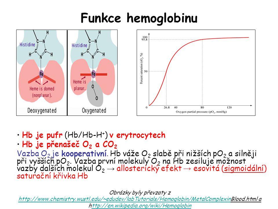 Funkce hemoglobinu Hb je pufr (Hb/Hb-H+) v erytrocytech