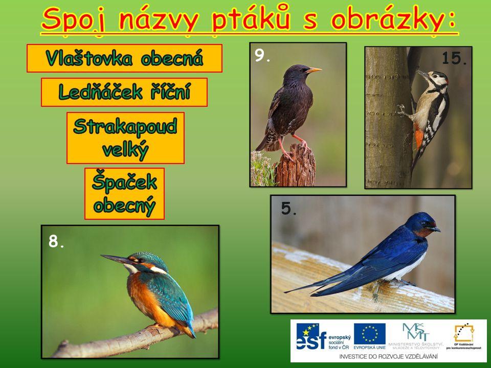 Spoj názvy ptáků s obrázky: