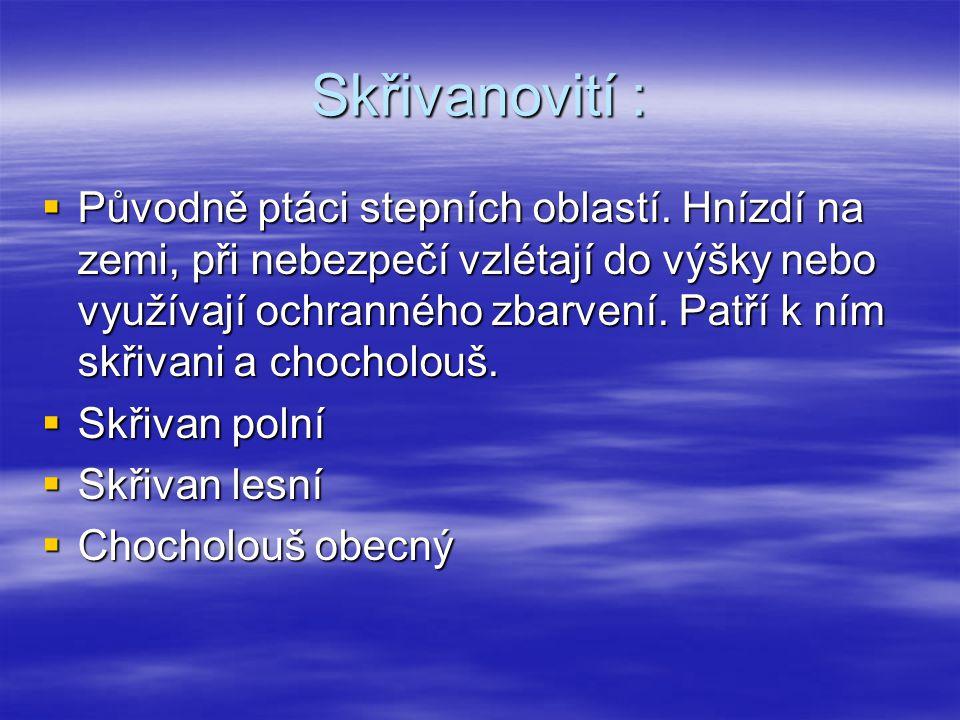Skřivanovití :