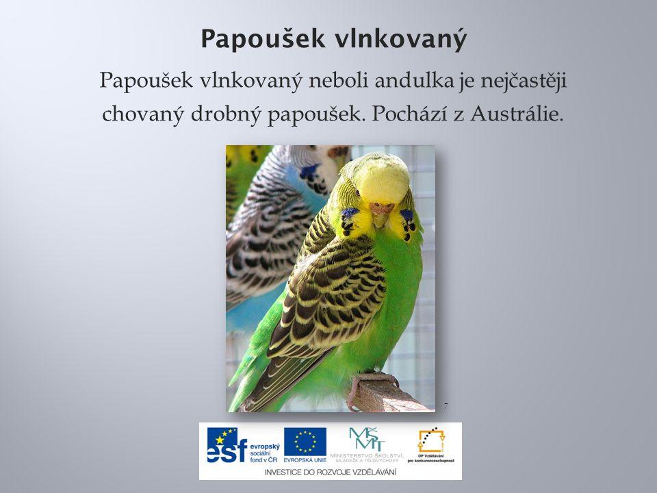 Papoušek vlnkovaný Papoušek vlnkovaný neboli andulka je nejčastěji chovaný drobný papoušek. Pochází z Austrálie.