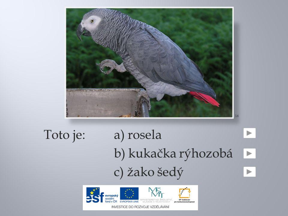 16 Toto je: a) rosela b) kukačka rýhozobá c) žako šedý