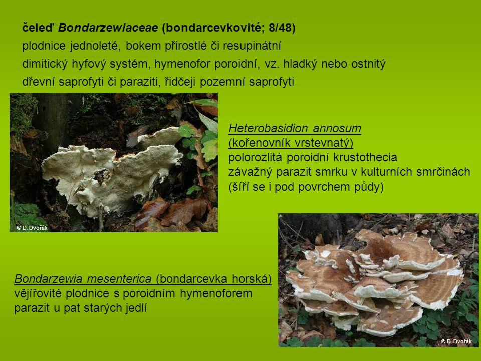 čeleď Bondarzewiaceae (bondarcevkovité; 8/48)