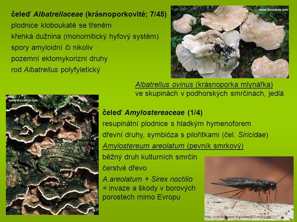 čeleď Albatrellaceae (krásnoporkovité; 7/45)