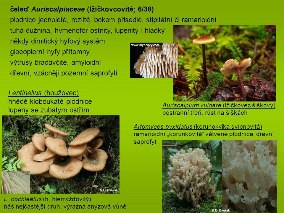 čeleď Auriscalpiaceae (lžičkovcovité; 6/38)