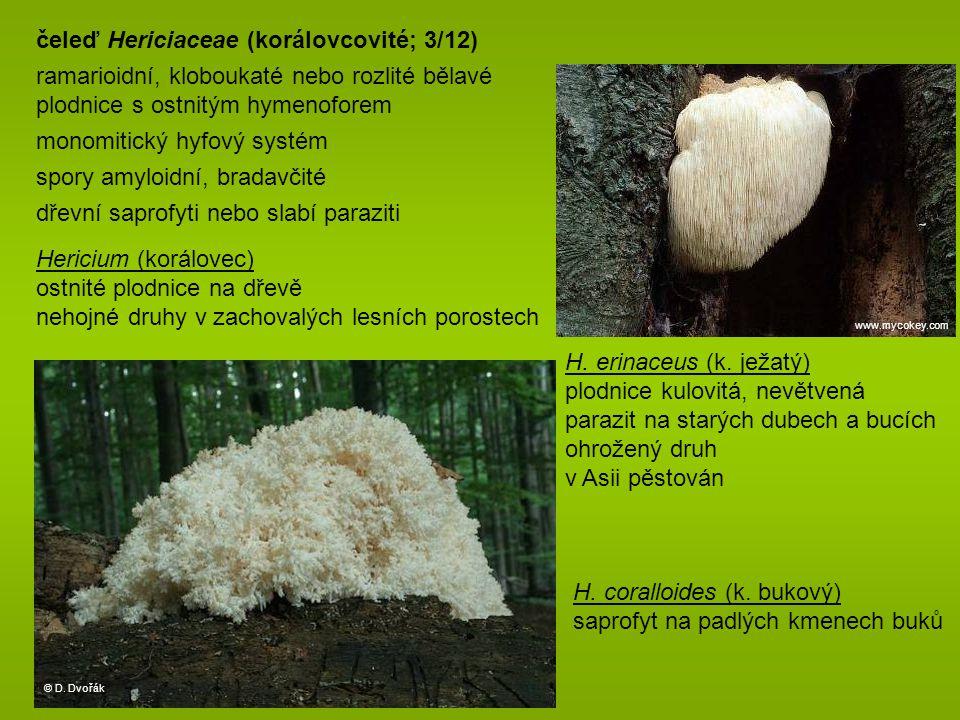 čeleď Hericiaceae (korálovcovité; 3/12)