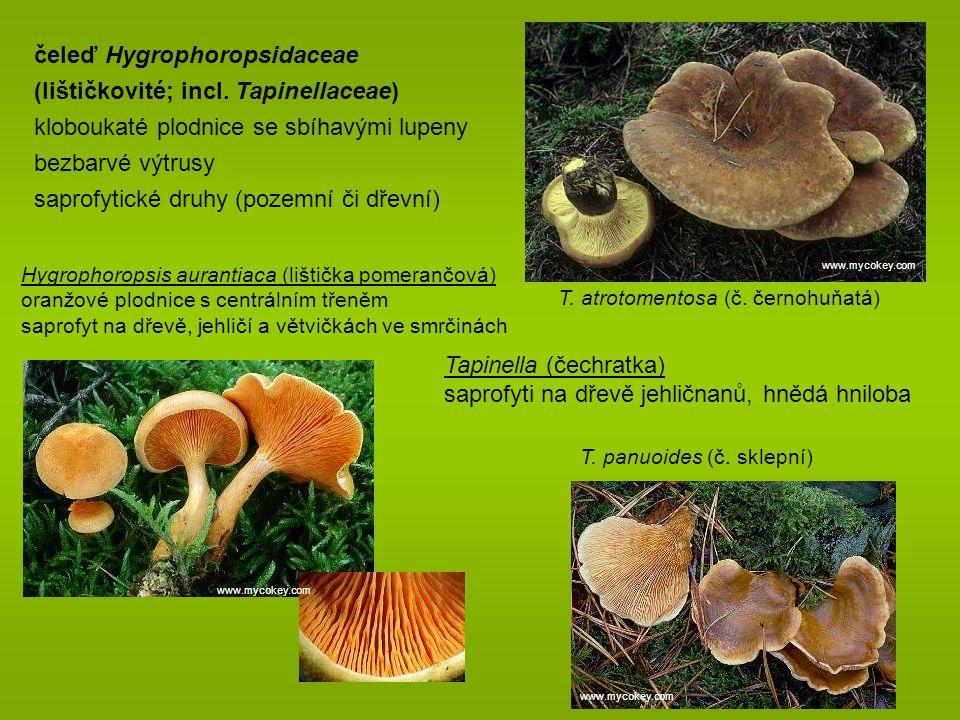 čeleď Hygrophoropsidaceae (lištičkovité; incl. Tapinellaceae)