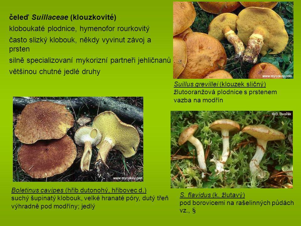 čeleď Suillaceae (klouzkovité)