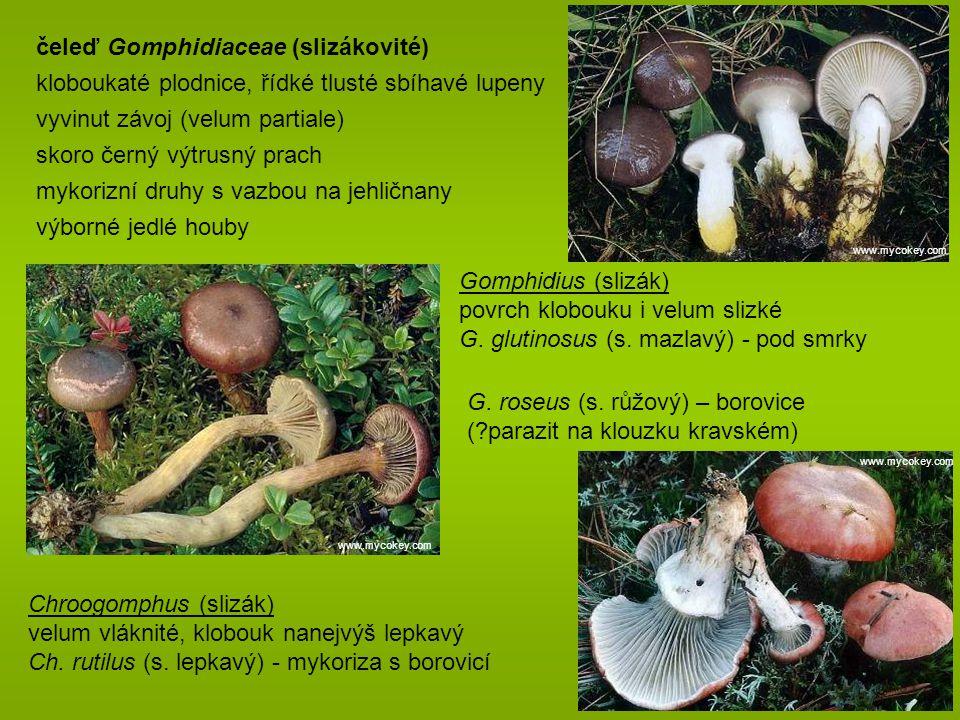 čeleď Gomphidiaceae (slizákovité)