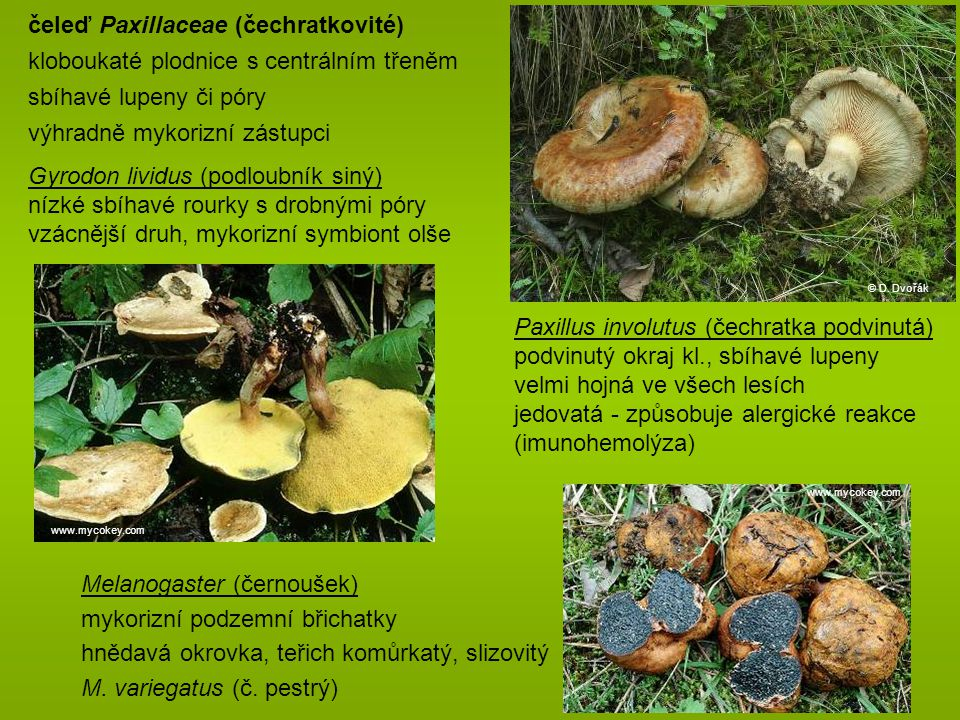 čeleď Paxillaceae (čechratkovité)