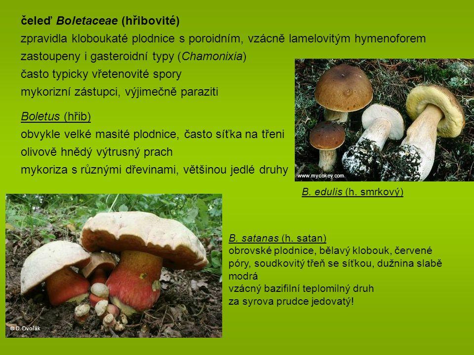 čeleď Boletaceae (hřibovité)