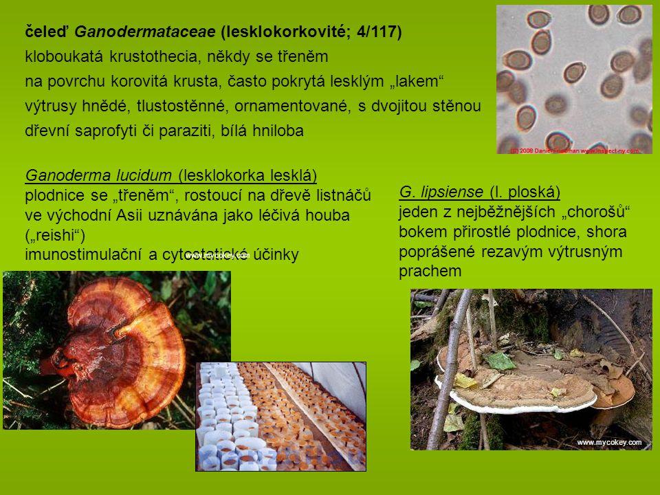 čeleď Ganodermataceae (lesklokorkovité; 4/117)