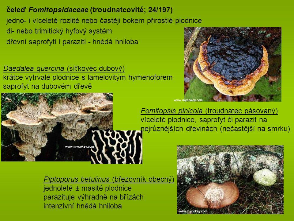 čeleď Fomitopsidaceae (troudnatcovité; 24/197)