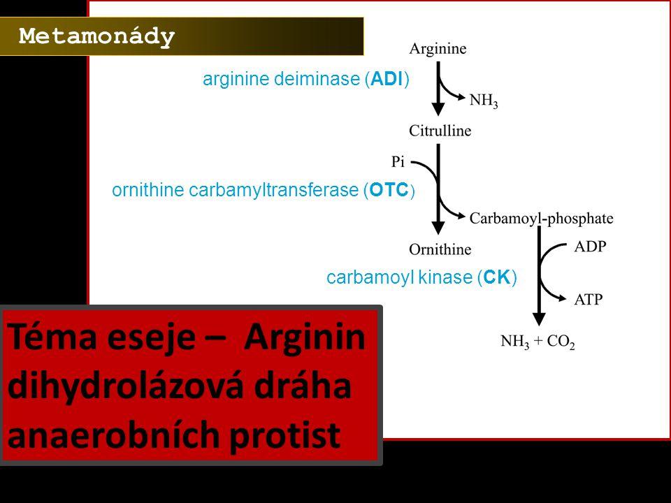 Téma eseje – Arginin dihydrolázová dráha anaerobních protist