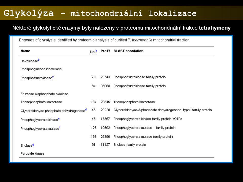 Glykolýza – mitochondriální lokalizace