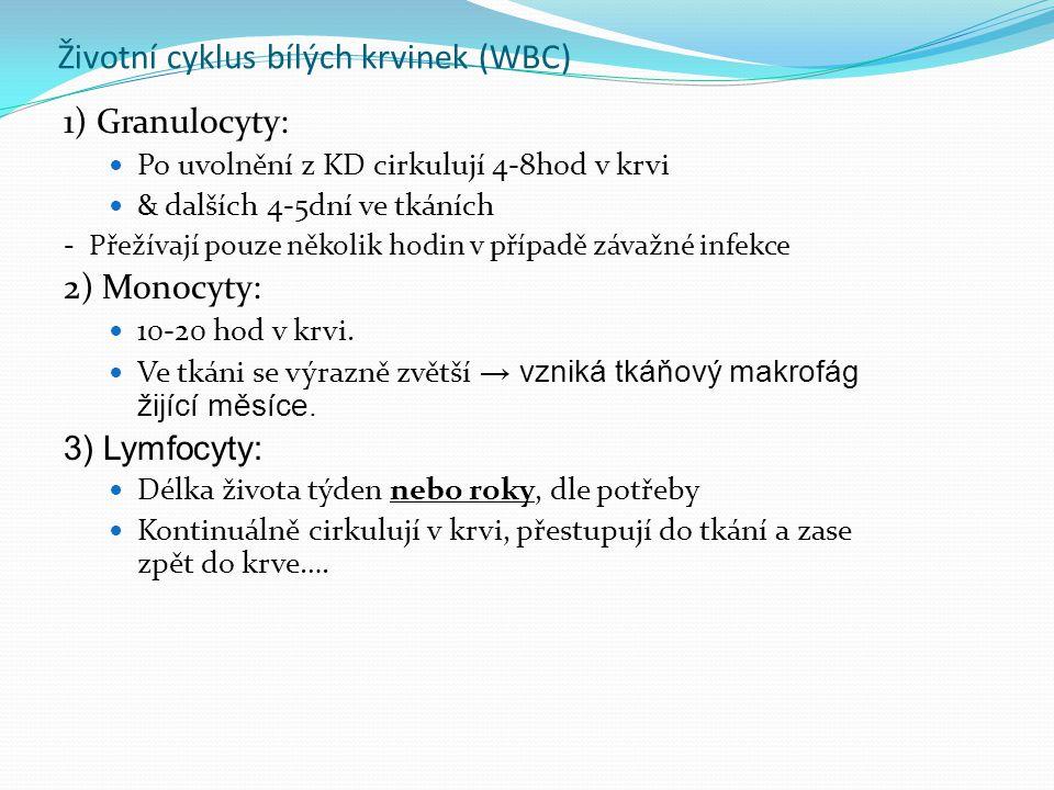 Životní cyklus bílých krvinek (WBC)