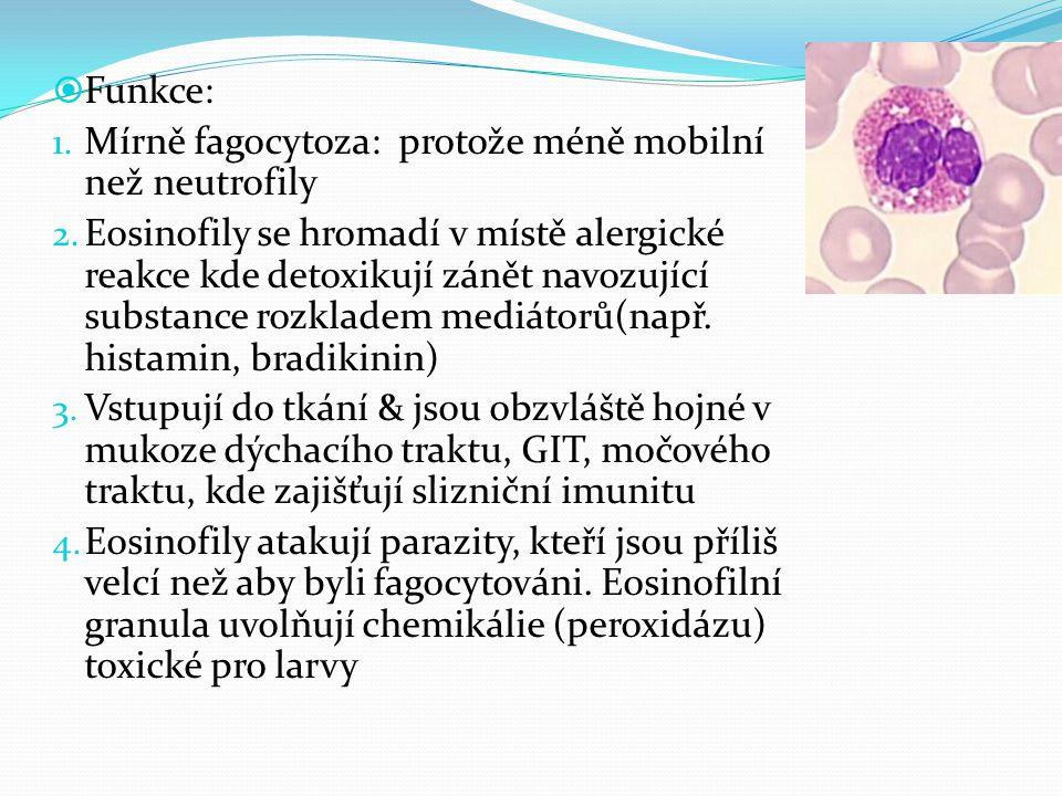 Funkce: Mírně fagocytoza: protože méně mobilní než neutrofily.