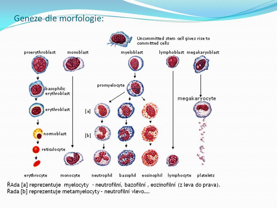 Geneze dle morfologie: