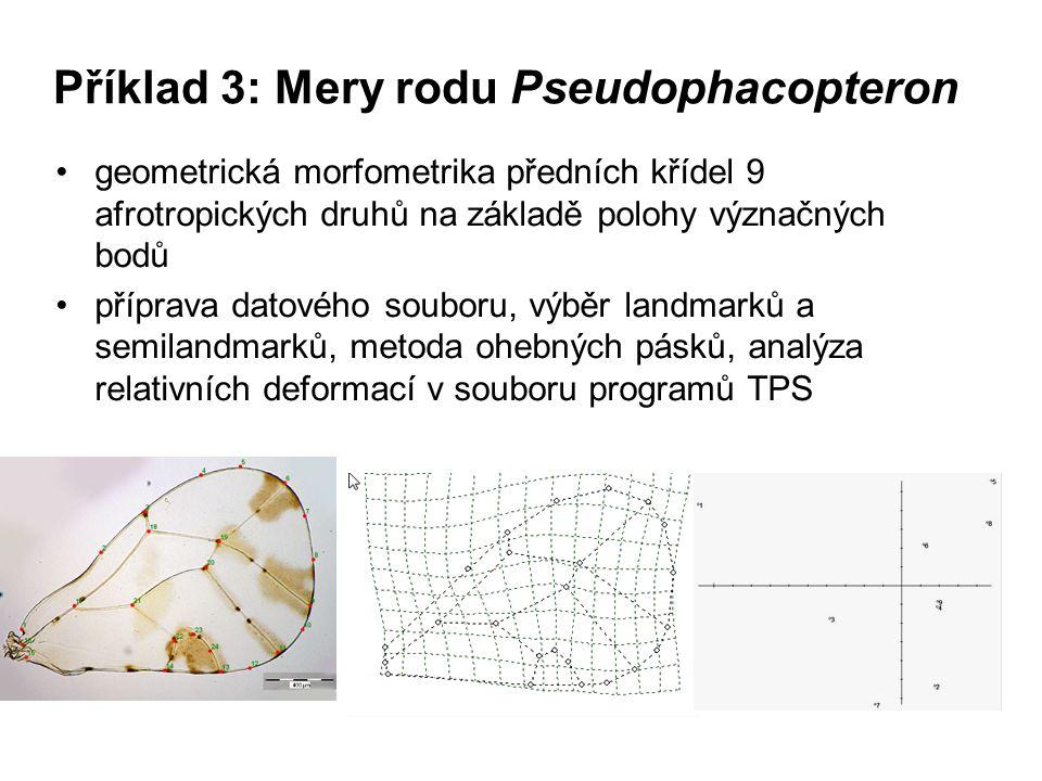 Příklad 3: Mery rodu Pseudophacopteron