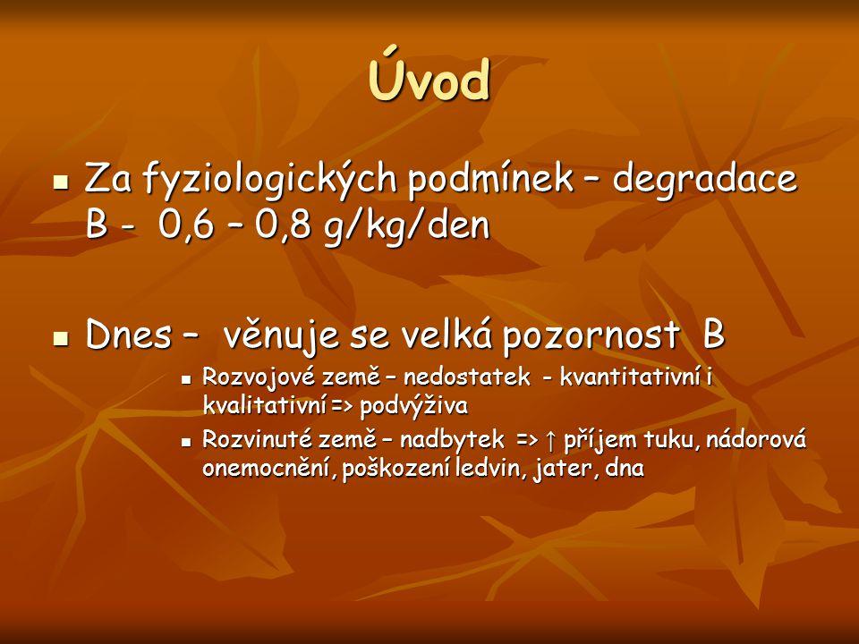 Úvod Za fyziologických podmínek – degradace B - 0,6 – 0,8 g/kg/den