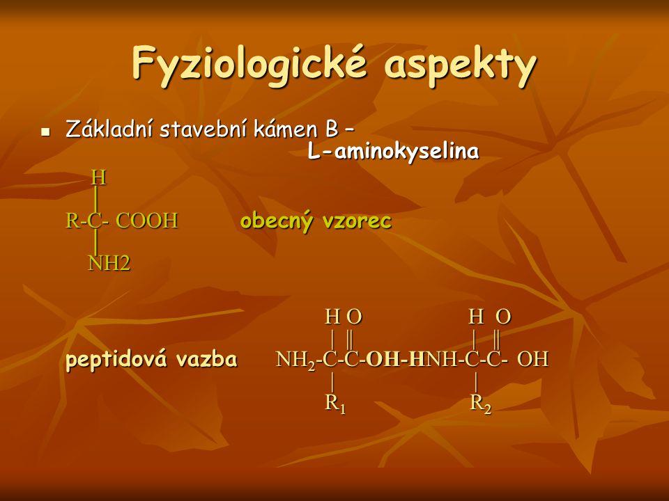 Fyziologické aspekty Základní stavební kámen B – L-aminokyselina