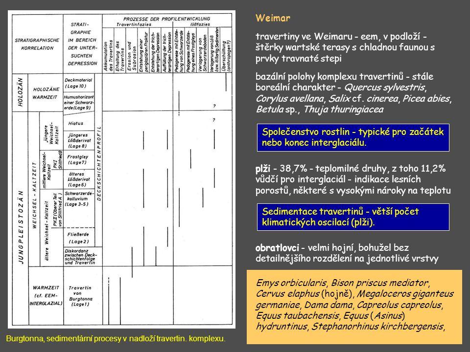 Společenstvo rostlin - typické pro začátek nebo konec interglaciálu.