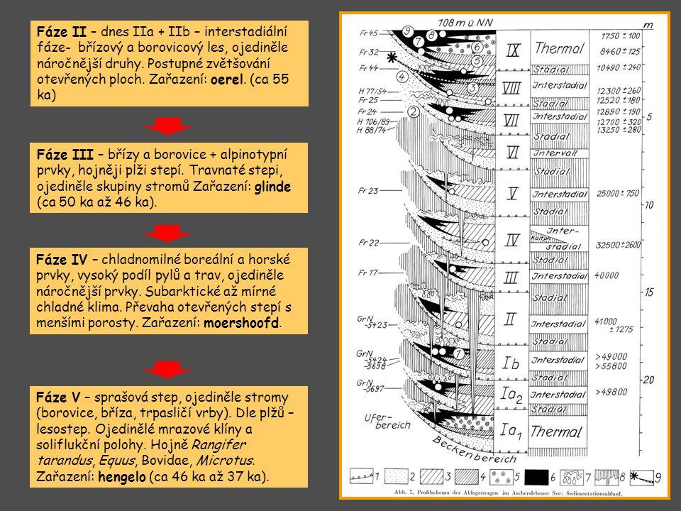 Fáze II – dnes IIa + IIb – interstadiální fáze- břízový a borovicový les, ojediněle náročnější druhy. Postupné zvětšování otevřených ploch. Zařazení: oerel. (ca 55 ka)