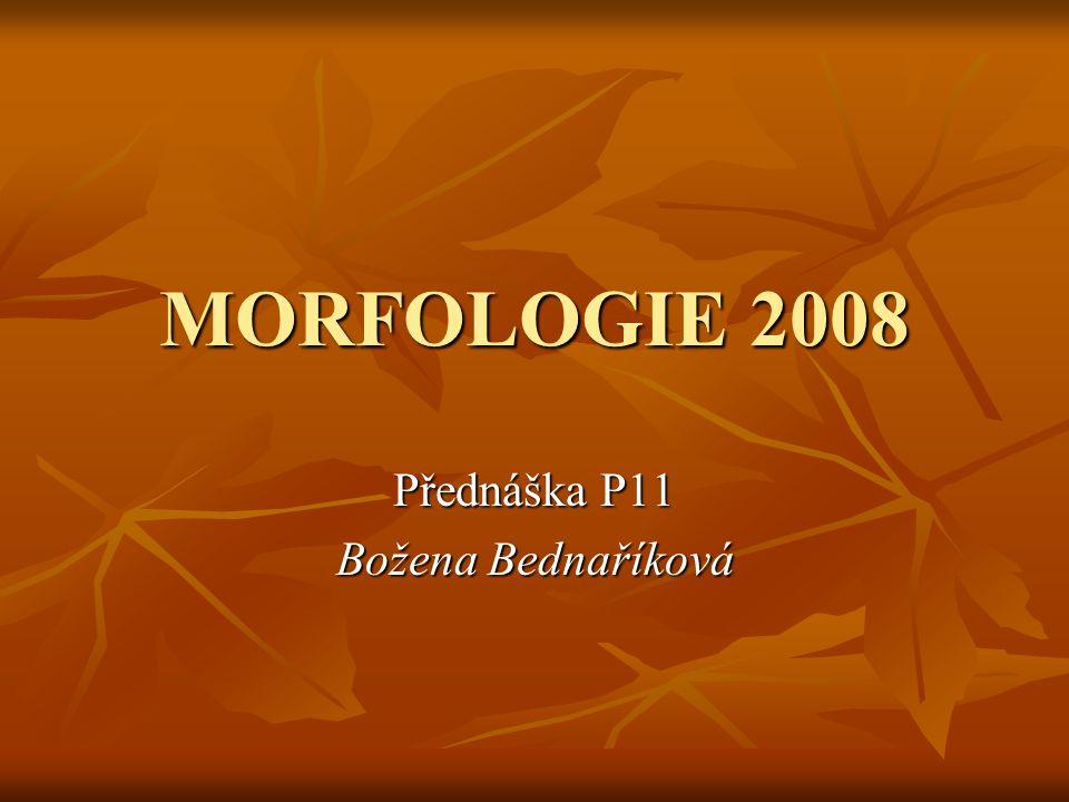 Přednáška P11 Božena Bednaříková
