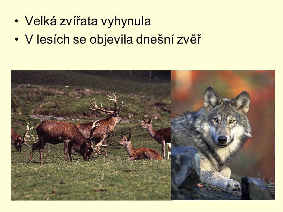 Velká zvířata vyhynula