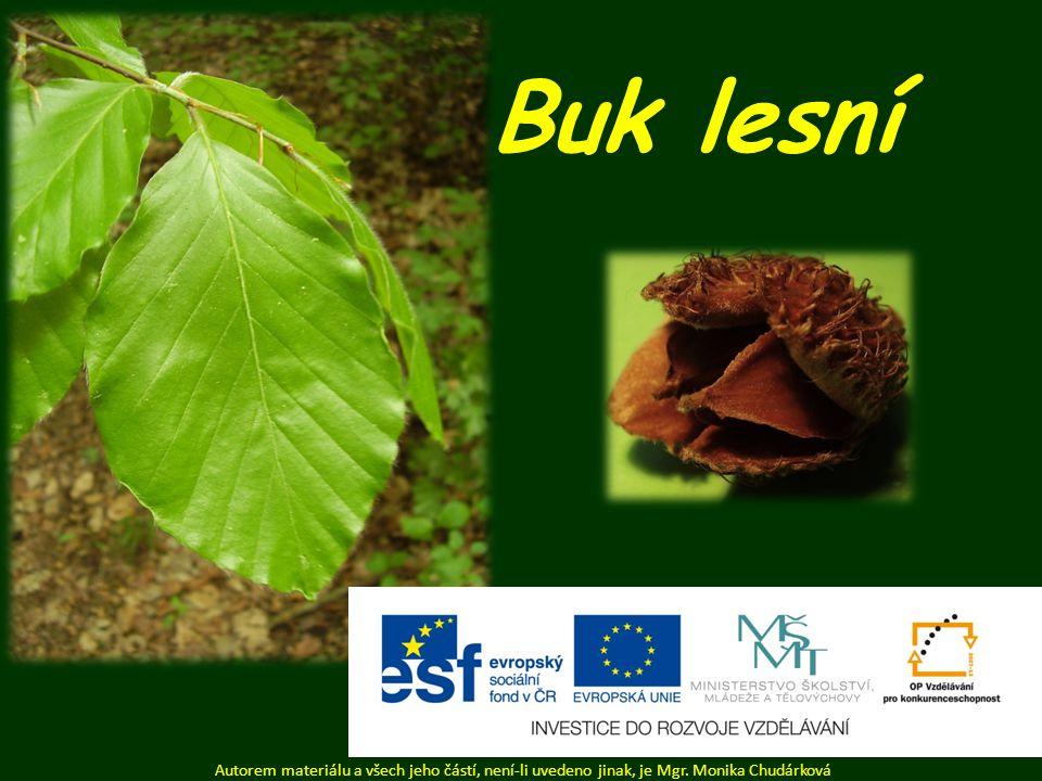 Buk lesní Autorem materiálu a všech jeho částí, není-li uvedeno jinak, je Mgr. Monika Chudárková